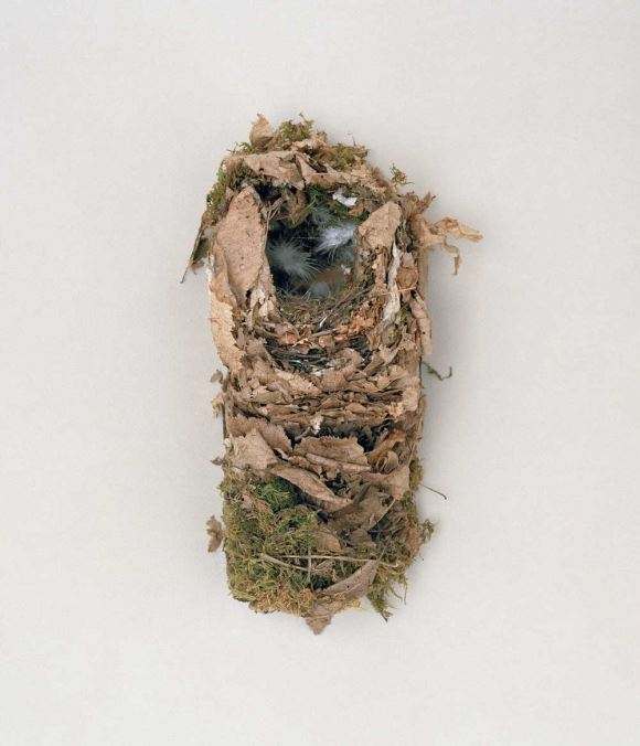 natures-master-architects-by-bianca-tuckwell-6-580x676