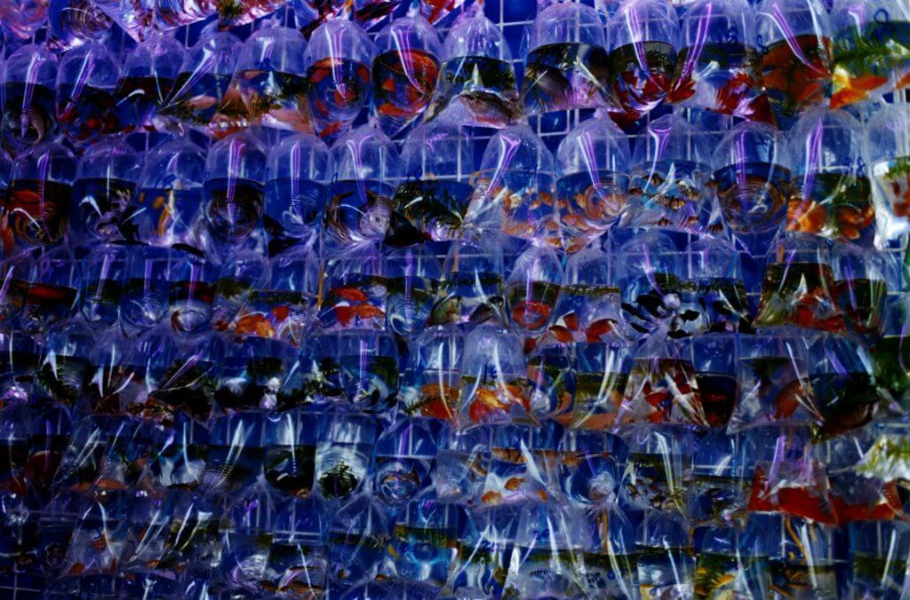 蜷川實花_C-print_68.6 x 103.0cm_2010(小山登美夫畫廊)_ Mika NINAGAWA_Noir_C-print_68.6 x 103.0cm_2010(Tomio Koyama Gallery)