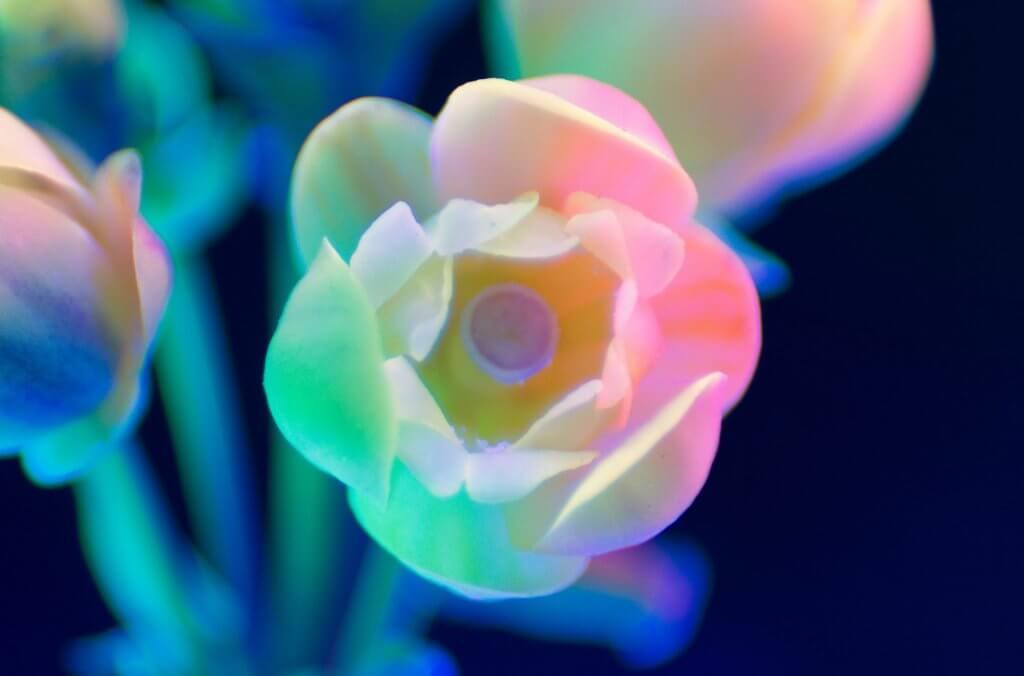 紫外線微距花卉攝影