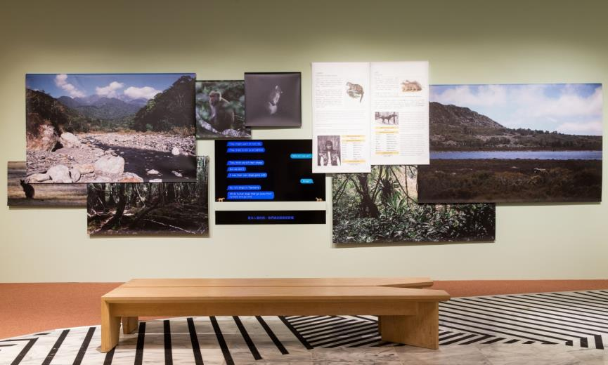 牠它星球 吳思嶔,《雲豹與袋狼的一場對話》,平片電視、動物模型、數位輸出,尺寸依現場而定,2016,臺北市立美術館提供。