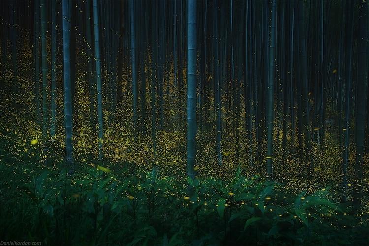 螢火蟲生態攝影
