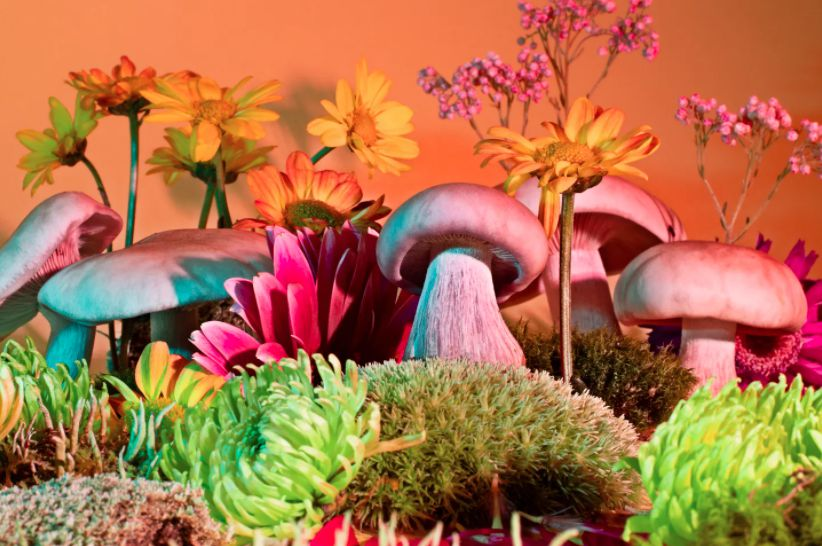 Mushrooms & Friends